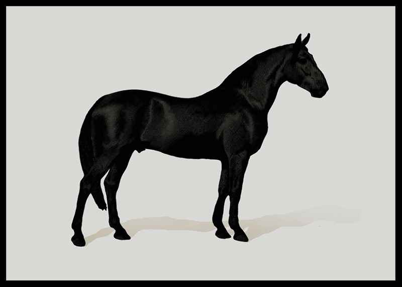 Black Horse Land. Drawing