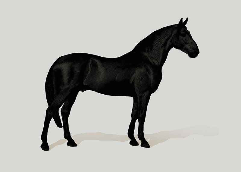 Black Horse Land. Drawing-1