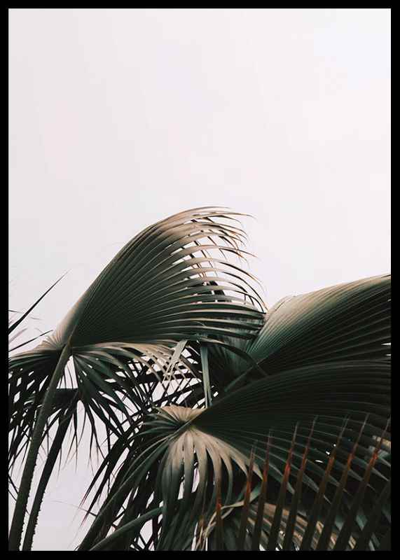 Palm Leaves-2