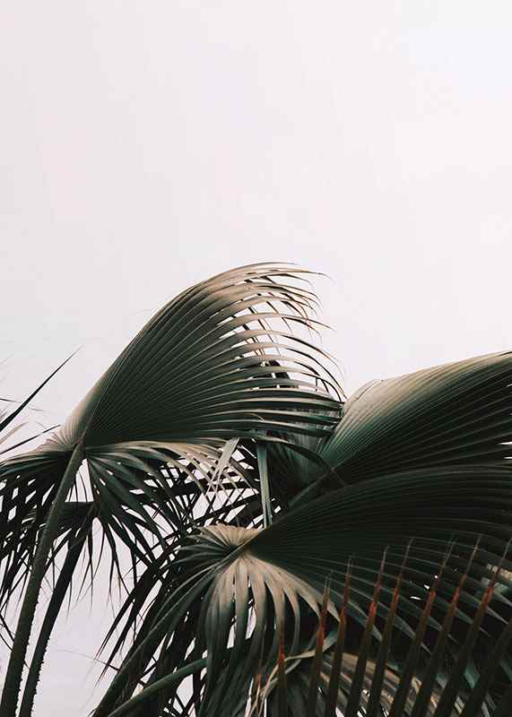 Palm Leaves-3