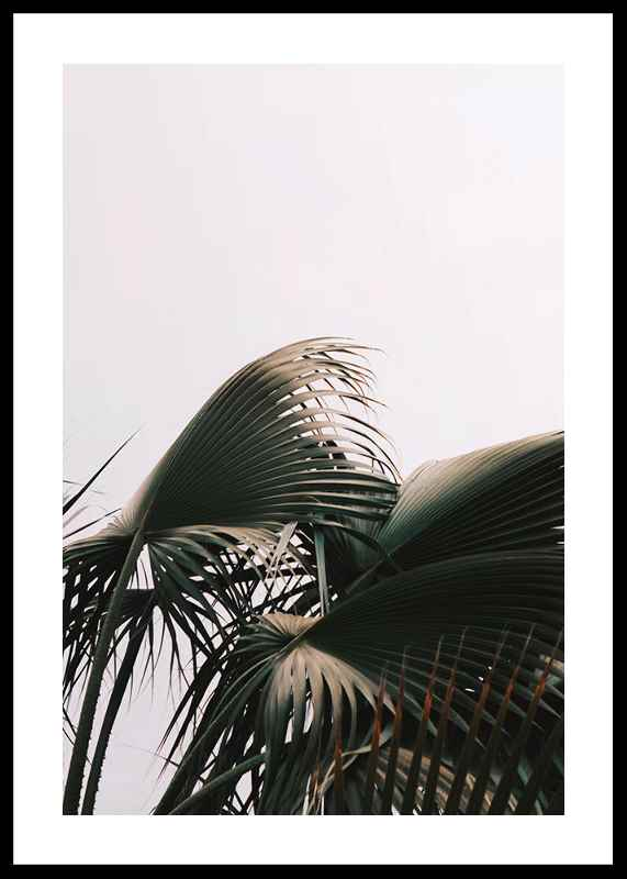 Palm Leaves-0