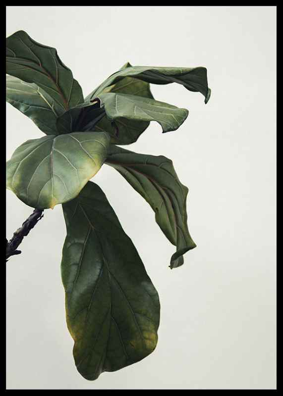 Botanical Leaves-2