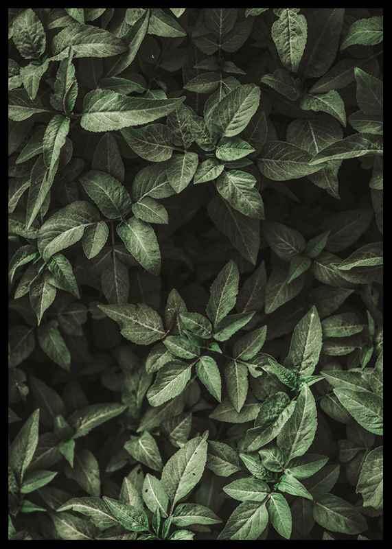 Garden Green No1-2