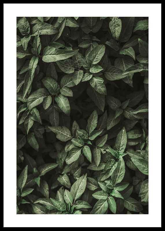 Garden Green No1-0