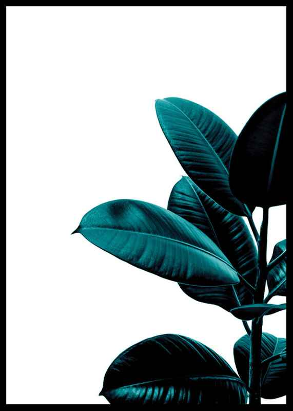 Rubber Plant Modern-2