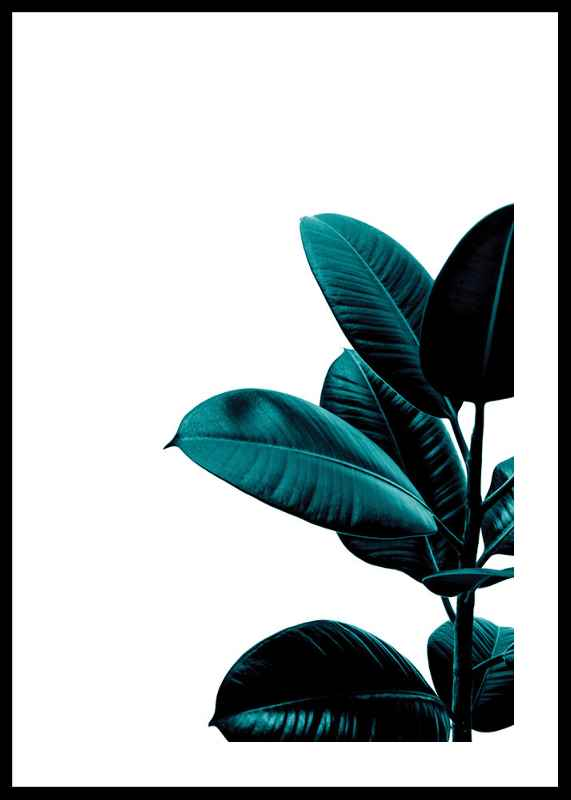 Rubber Plant Modern