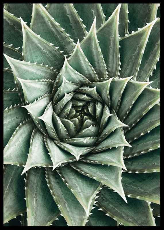 Agave Close Up No2-2