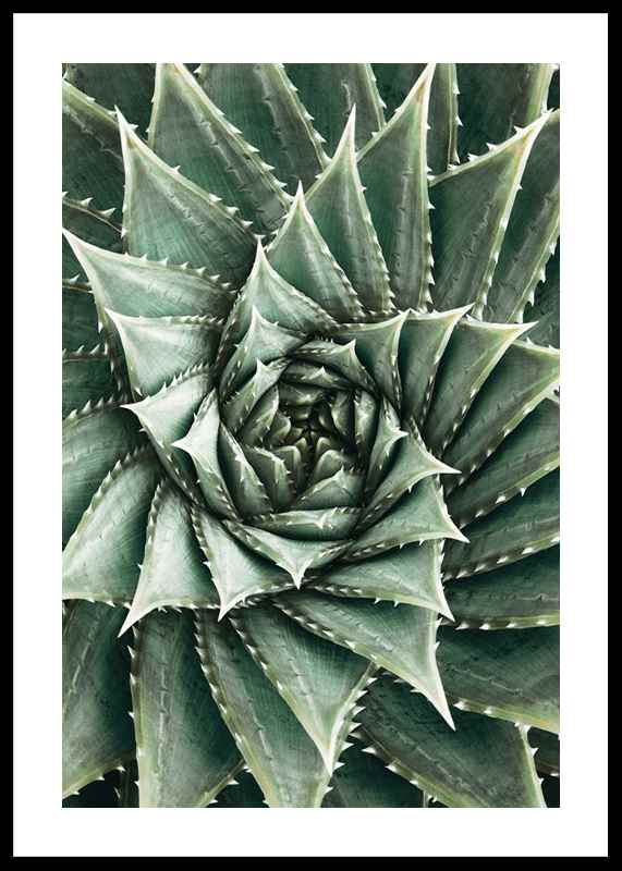 Agave Close Up No2-0