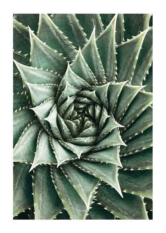 Agave Close Up No2-1