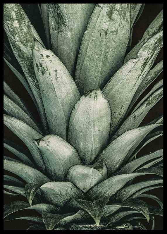 Pineapple Close-2