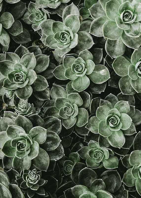 Close Up Green-3