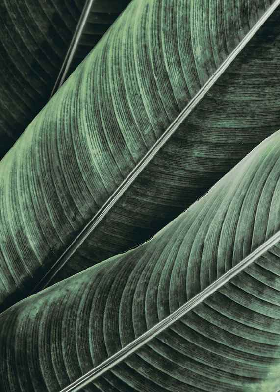 Palm Leaves Close Up-3