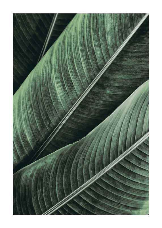 Palm Leaves Close Up-1