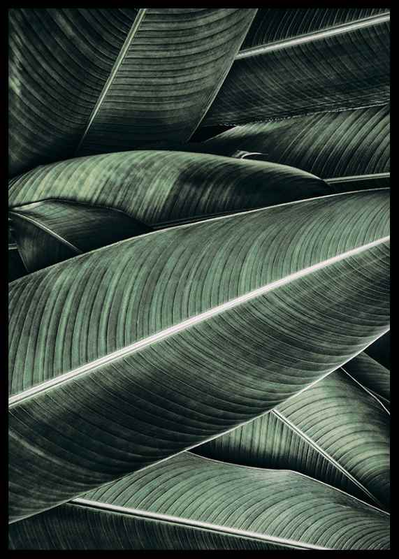 Banana Leaves No2-2