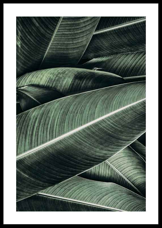 Banana Leaves No2