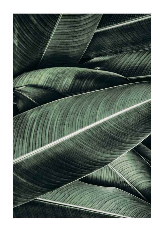 Banana Leaves No2-1