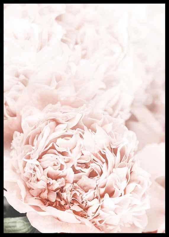 Loving Roses No1-2