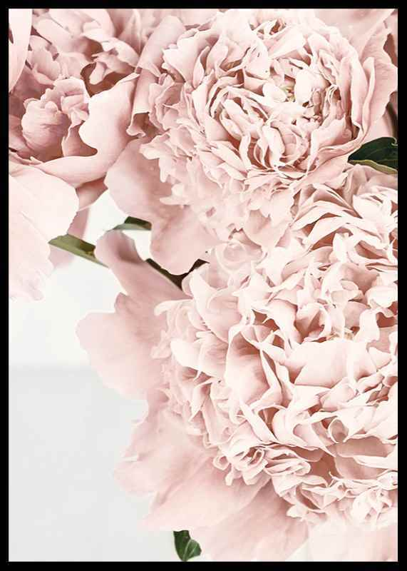 Loving Roses No2-2