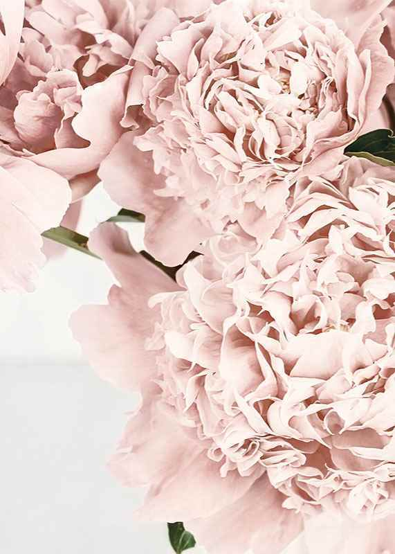Loving Roses No2-3