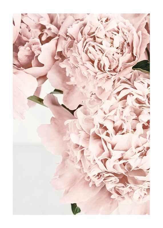 Loving Roses No2-1