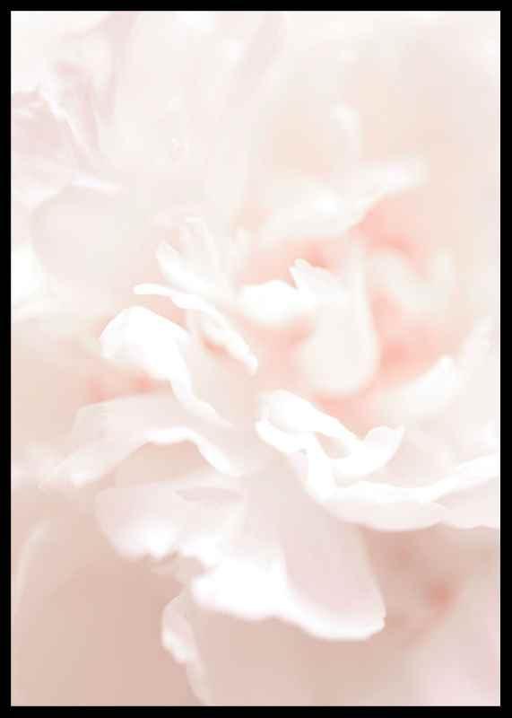 Tender Flowers No1-2
