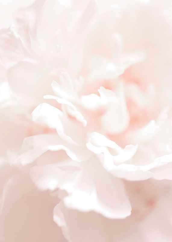 Tender Flowers No1-3