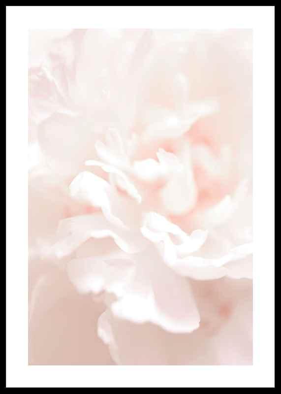 Tender Flowers No1