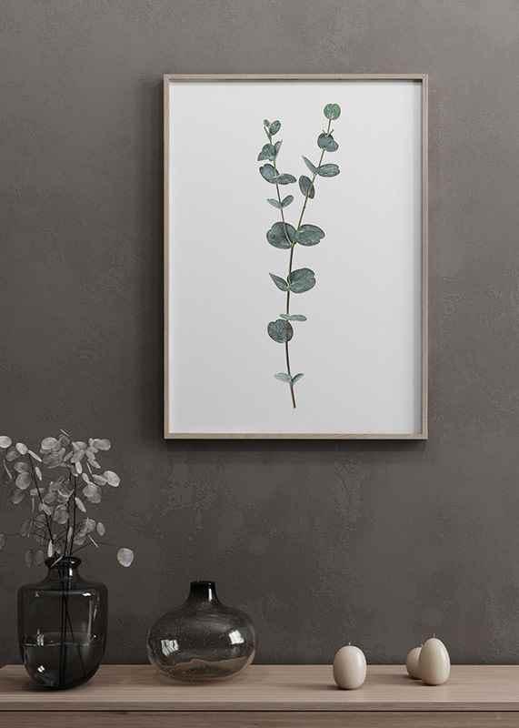 Eucalyptus No2-4