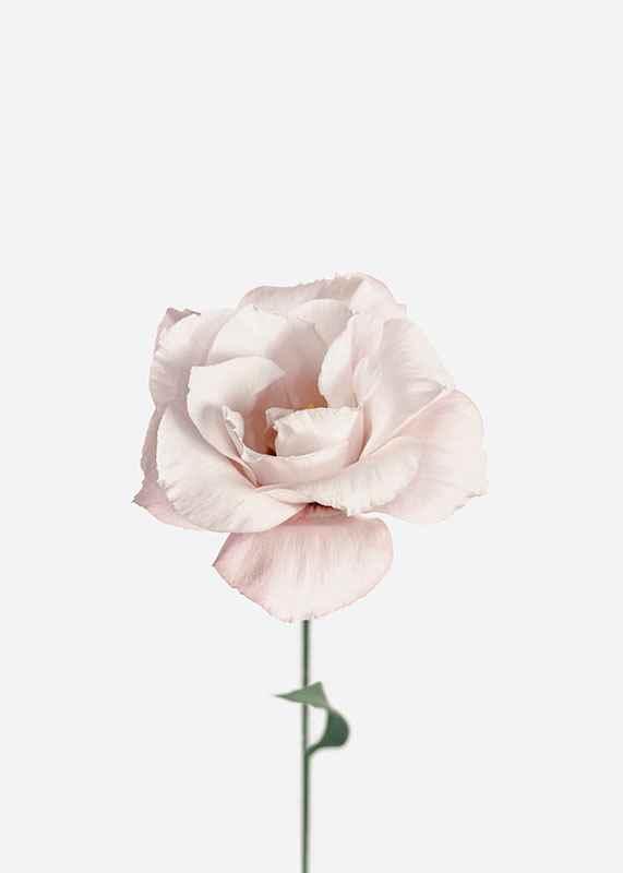 Pink Rose No1-3