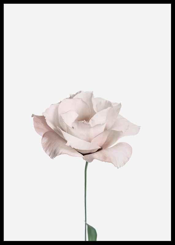 Pink Rose No2-2