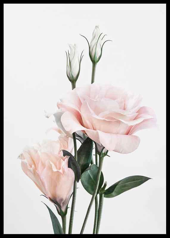 Rose Bouquet No1-2