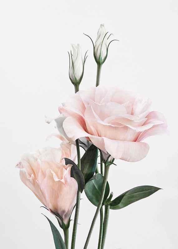 Rose Bouquet No1-3