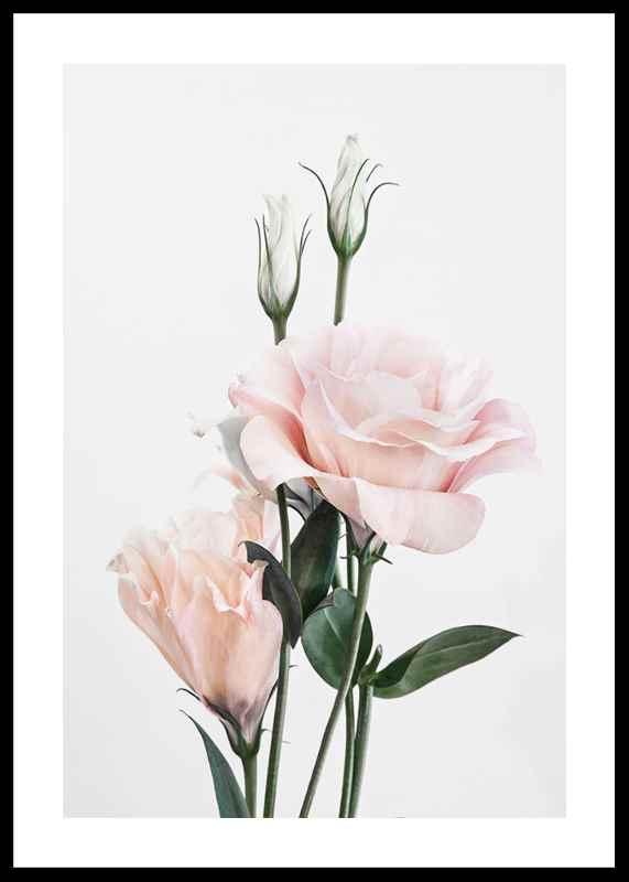 Rose Bouquet No1-0