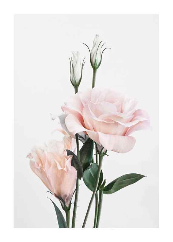 Rose Bouquet No1-1