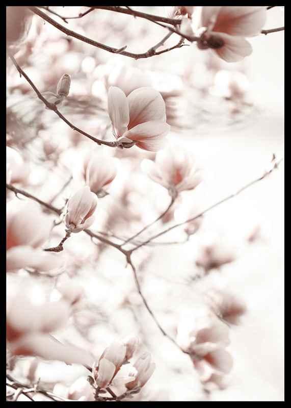 Pink Botanical Shades-2