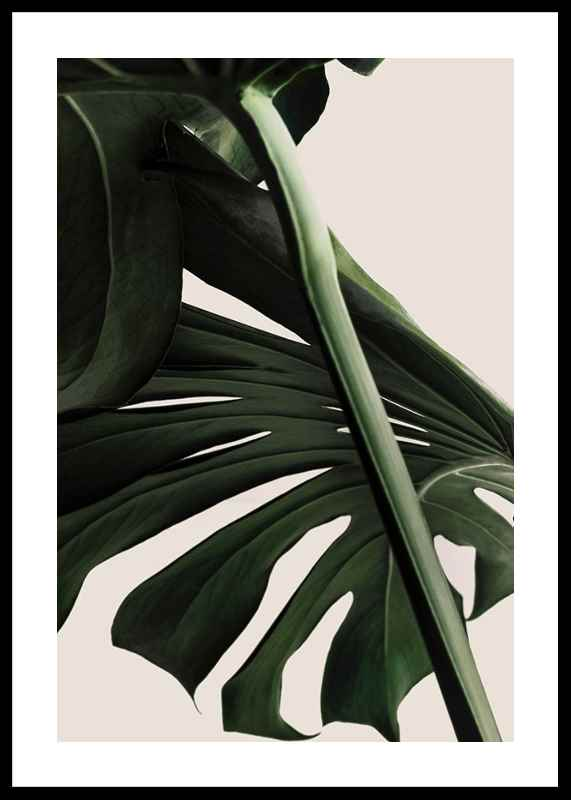 Monstera One