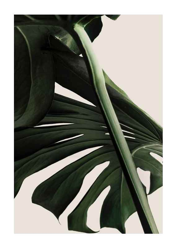 Monstera One-1