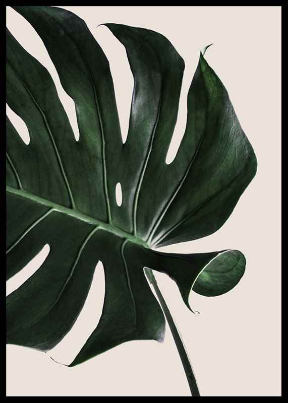 Monstera Two-2