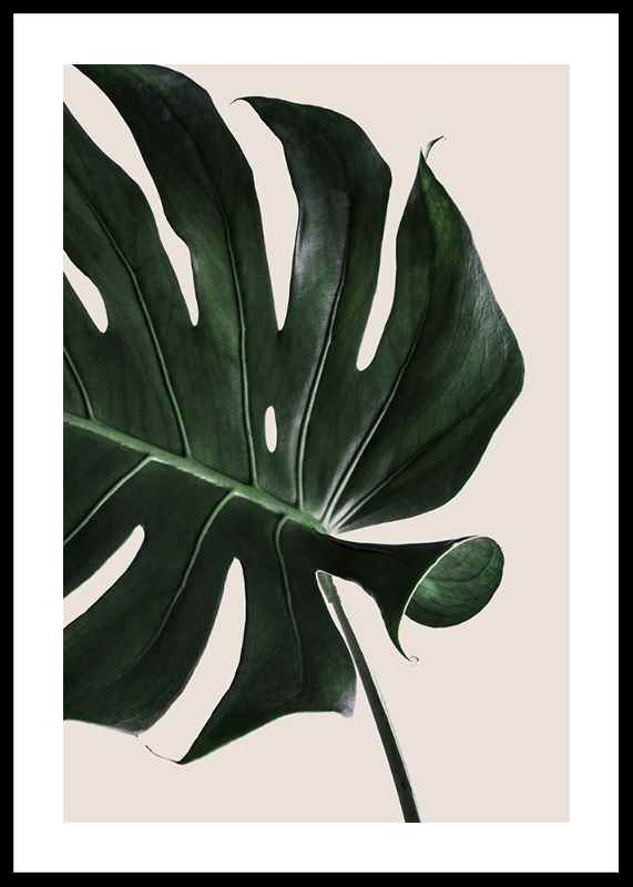 Monstera Two-0