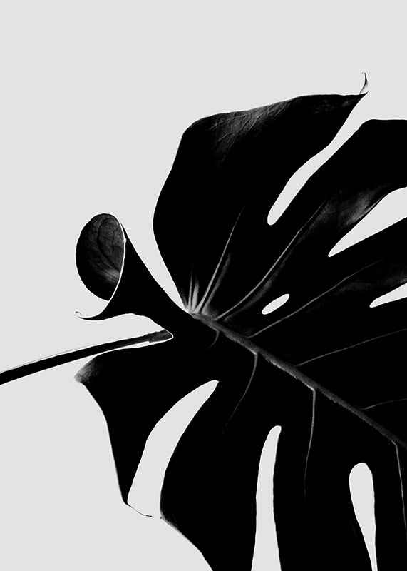 Monstera Black-3