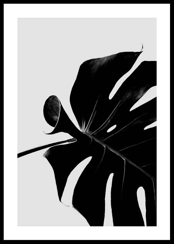 Monstera Black-0