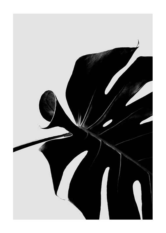 Monstera Black-1