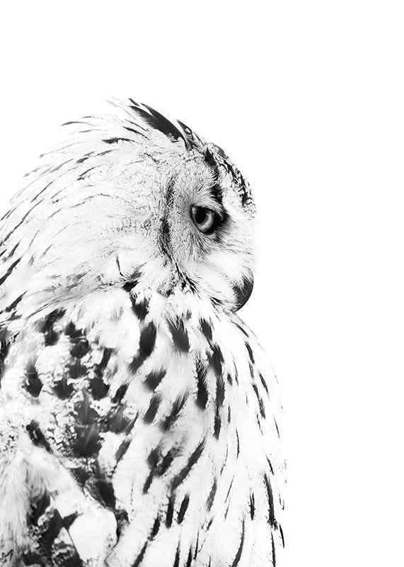 Snow Owl-3