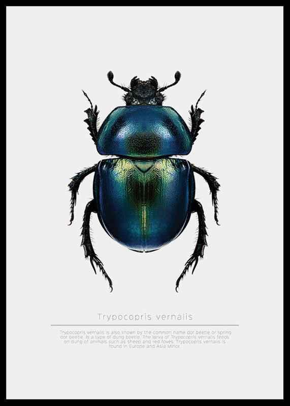Beetle Display-2