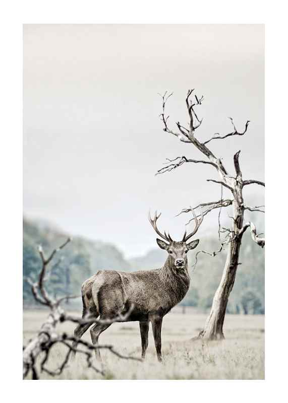 Winter Deer-1