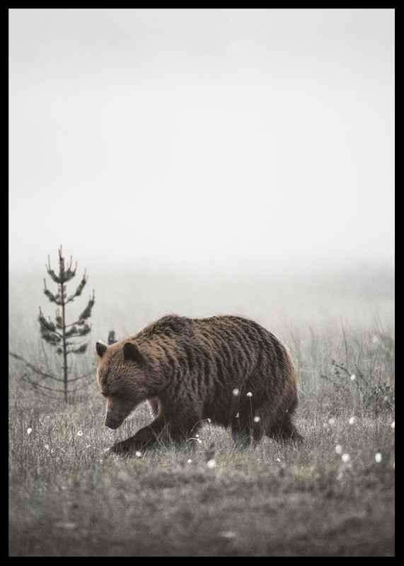 Winter Bear-2
