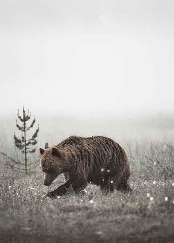Winter Bear-3
