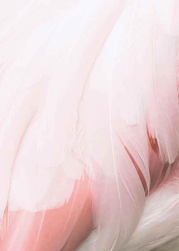 Flamingo Feathers-3
