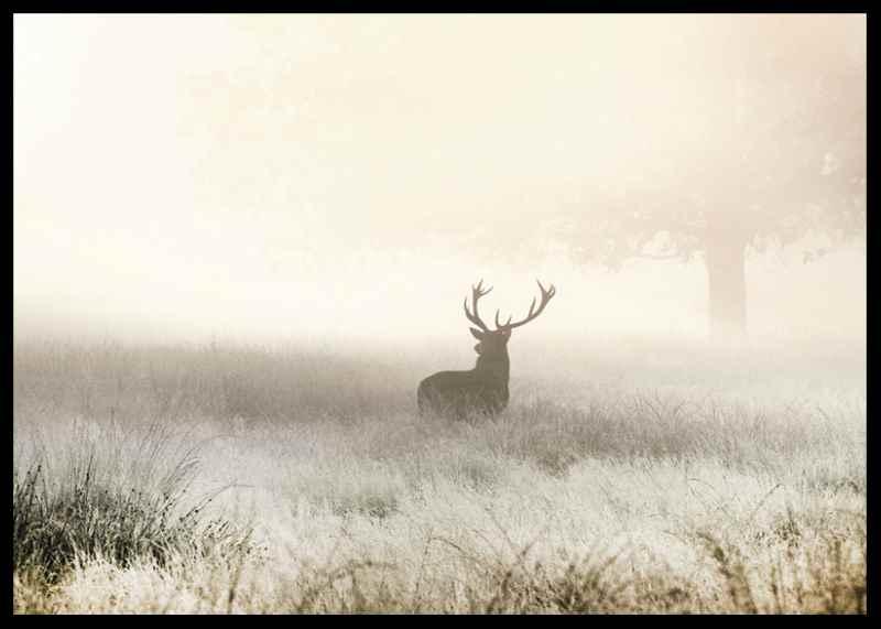 Deer In Mist-2