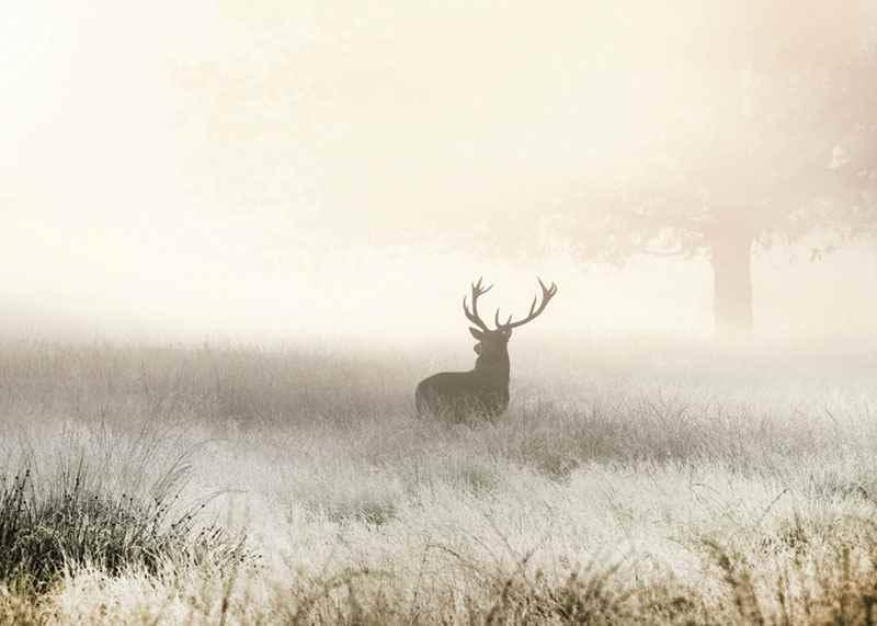 Deer In Mist-3